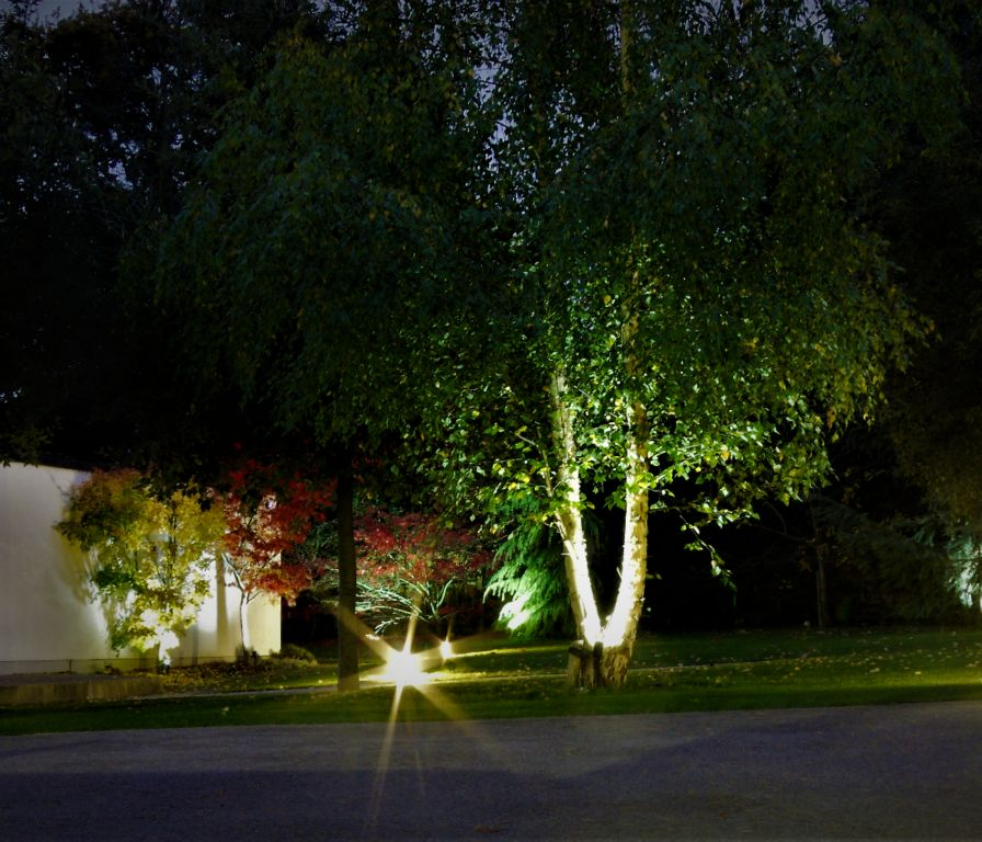 Wall and Silver Birch uplighting