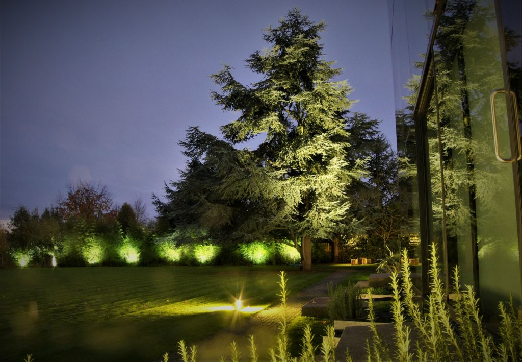 Large uplit Cedar with lit bamboo