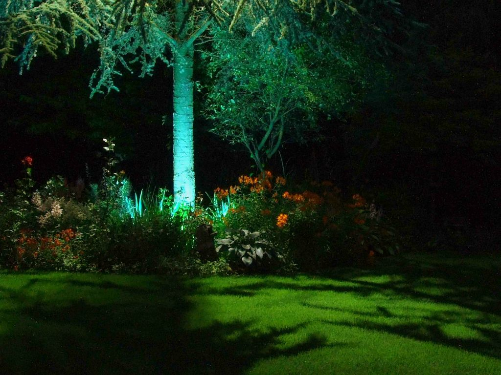 Moonlighting on lawn with Pine tree