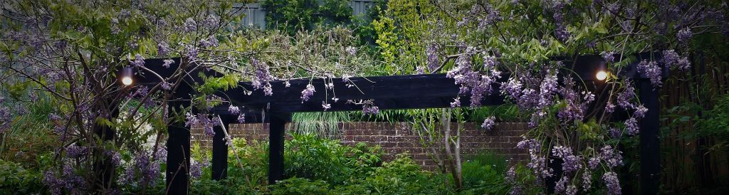 Pergola lighting with Wisteria