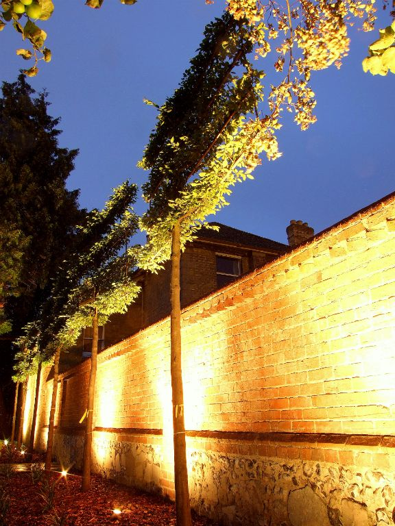 Wall lighting with pleached Hornbeams